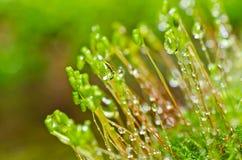 新绿色青苔本质 库存照片