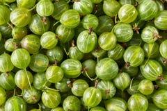 新绿色鹅莓关闭当背景纹理 免版税库存图片