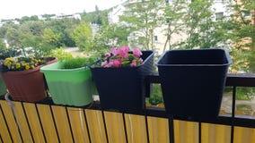 新美丽的夏天自然的花 免版税库存照片