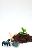 新耕种从事园艺的想法的寿命 免版税库存照片
