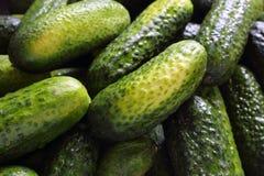 新腌制的黄瓜特写镜头食物背景 免版税库存照片
