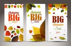 新自然与叶子和样品的秋天垂直的横幅发短信 免版税图库摄影