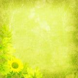 新自然背景纹理 库存图片