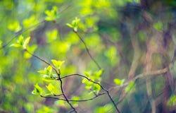 新自然绿色 库存图片