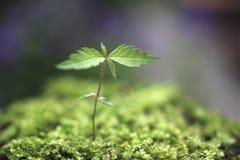 新芽在森林里。 免版税图库摄影