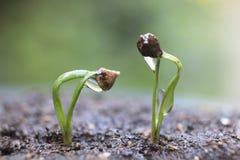 新芽在森林里。 免版税库存图片