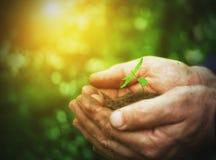 年轻新芽植物在老肮脏的手,概念上 免版税库存图片