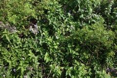 新芽的春天在多布罗加小山的  免版税库存照片