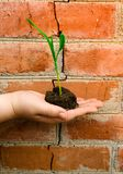 新芽绿色植物手中婴孩手指孩子 免版税库存照片