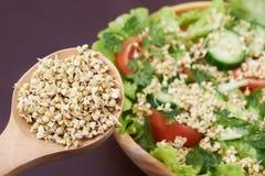 新芽 绿色荞麦 健康 素食主义 沙拉 免版税库存照片