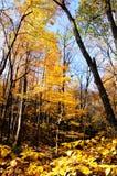 新英国的秋天 图库摄影