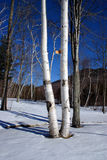 新英格兰冬天 库存照片