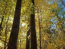 新英格兰的秋叶颜色 库存图片