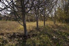 新苹果树 免版税图库摄影