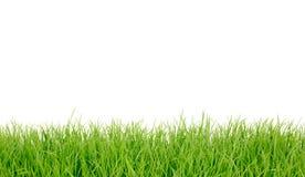 新草绿色全景春天 免版税图库摄影