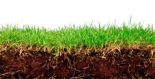 新草绿色土壤春天 库存照片