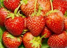 新草莓背景。 库存照片