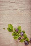 新蓝色莓果分支被隔绝的葡萄酒布料 库存照片