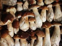 新蘑菇牛肝菌蕈类背景 秋天等概率圆蘑菇 免版税图库摄影