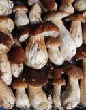 新蘑菇牛肝菌蕈类背景 秋天等概率圆蘑菇 库存照片