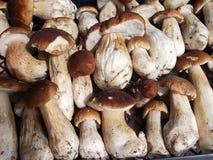 新蘑菇牛肝菌蕈类背景 秋天等概率圆蘑菇 库存图片