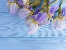 新虹膜开花秀丽庆祝在蓝色木背景的委员会植物群装饰卡片高雅花 库存图片