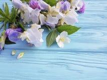 新虹膜开花秀丽庆祝在蓝色木背景的植物群装饰卡片高雅花 免版税库存照片