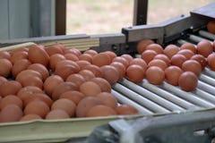 新蛋分级和分拣机、等级鸡蛋由重量和大小 免版税库存照片