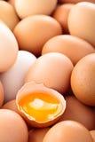 新蛋背景 免版税库存图片