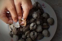 新血液鸟蛤市场 图库摄影