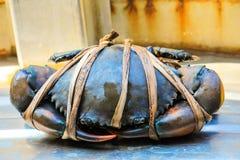 新被加锯齿的泥螃蟹黑色在海鲜市场上 免版税库存照片