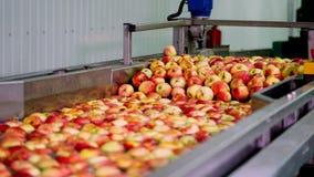 新被采摘的苹果收获洗涤苹果的过程在果子生产设备,特别浴,包装的木盆在 股票录像