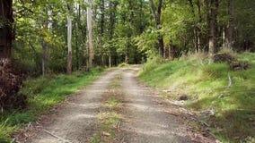 新西兰乡下公路通过橡木森林4k 股票视频