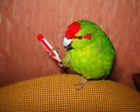 新西兰共同的绿色鹦鹉 坐在爪子的一支铅笔 库存图片