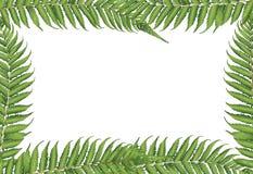 新西兰叶子 免版税库存照片