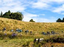 新西兰在夏天 免版税库存照片