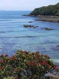 新西兰夏天: 潜水在海洋预留 免版税库存图片