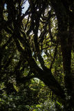 新西兰布什 免版税图库摄影
