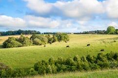 新西兰平安的农田 图库摄影