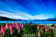 新西兰狂放的风景 库存图片