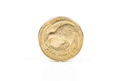 新西兰猕猴桃美元 免版税库存图片