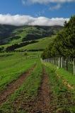 新西兰的农田 免版税库存图片