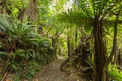 新西兰的当地灌木 免版税图库摄影