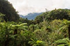 新西兰的当地灌木 免版税库存照片