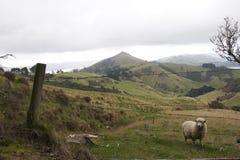 新西兰的明信片 免版税库存图片
