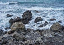 新西兰的海景 图库摄影
