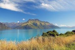 新西兰的狂放的本质 库存照片