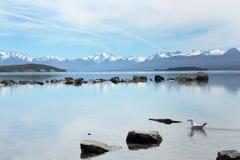 新西兰的蓝色秀丽 库存图片