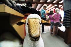 新西兰羊毛界面 免版税库存图片