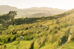新西兰风景 免版税库存图片